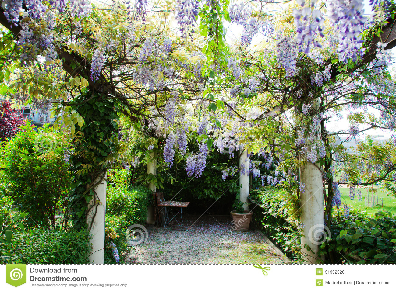 pergola de jardin avec la glycine chinoise photo stock. Black Bedroom Furniture Sets. Home Design Ideas
