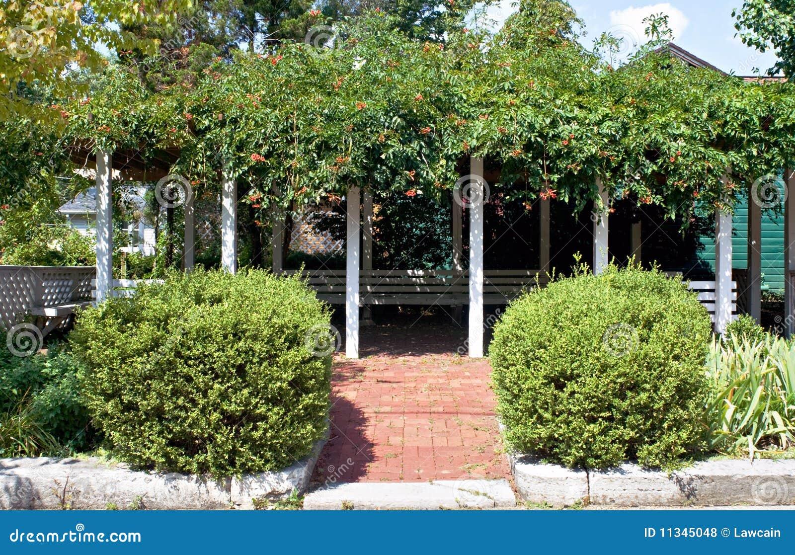 Pergola met de wijnstokken van de trompet stock foto afbeelding 11345048 - Wijnstokken pergola ...