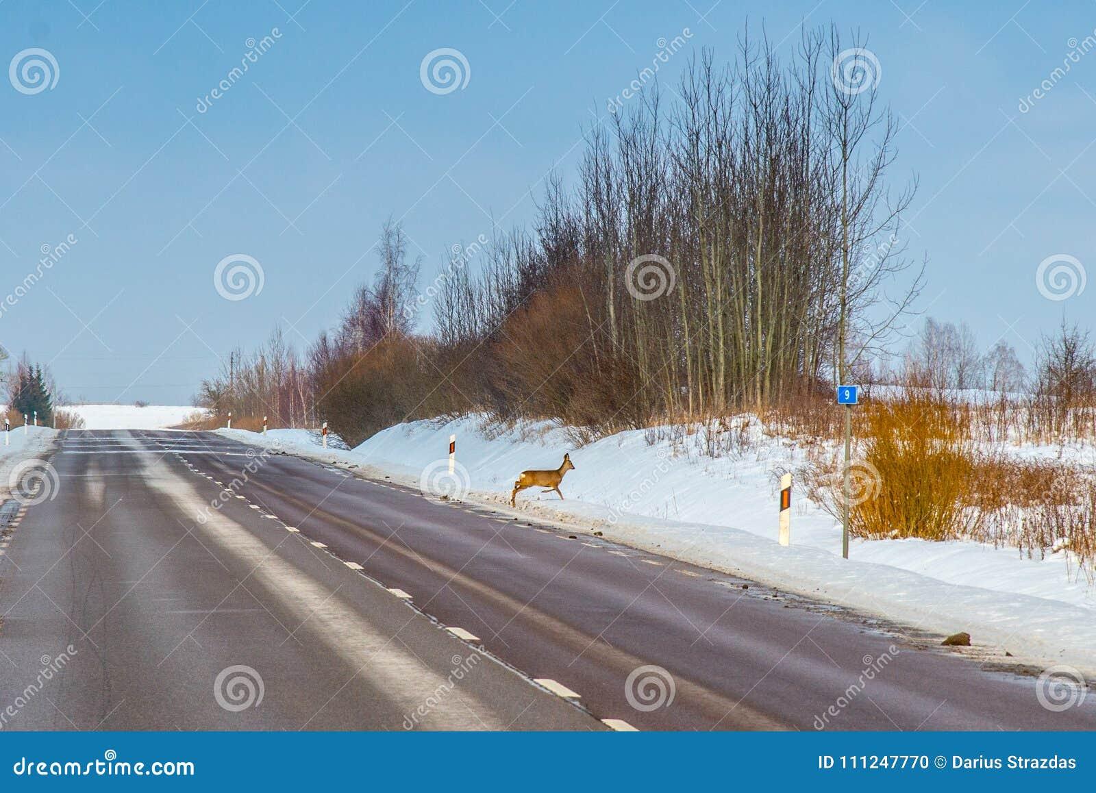 Perigo da estrada, cruzamento dos animais