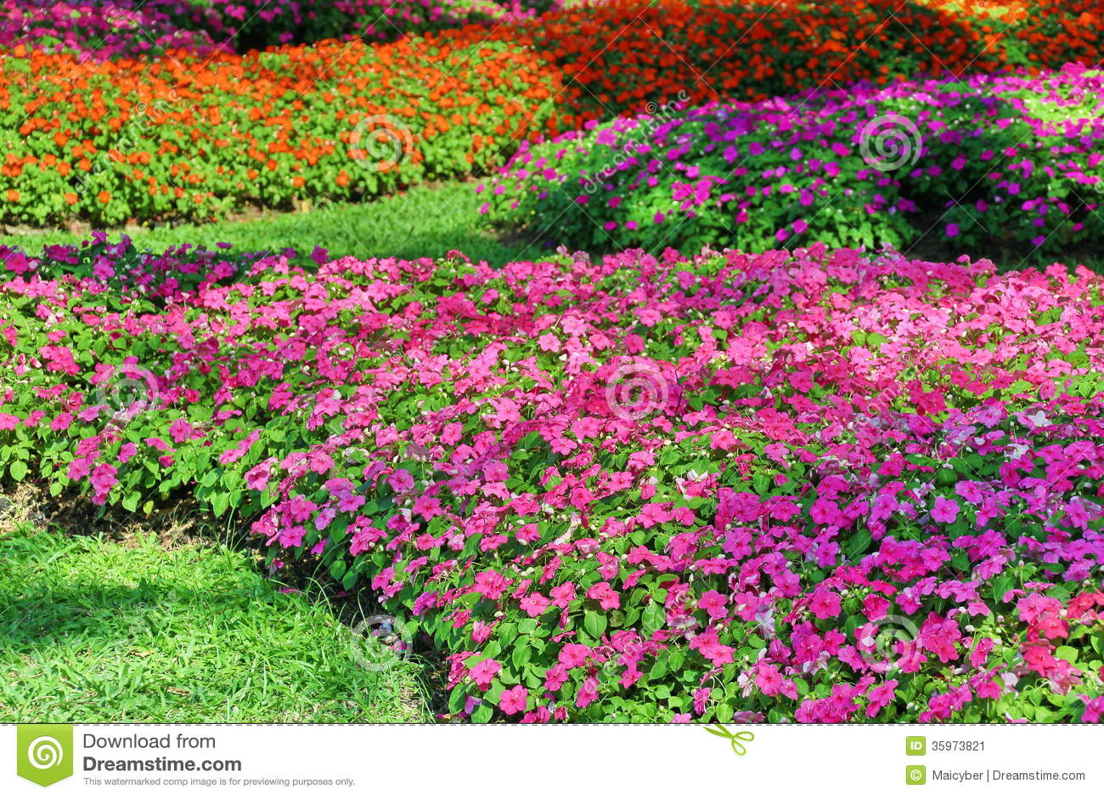Periwinkle Flower Stock Image - Image: 35973821