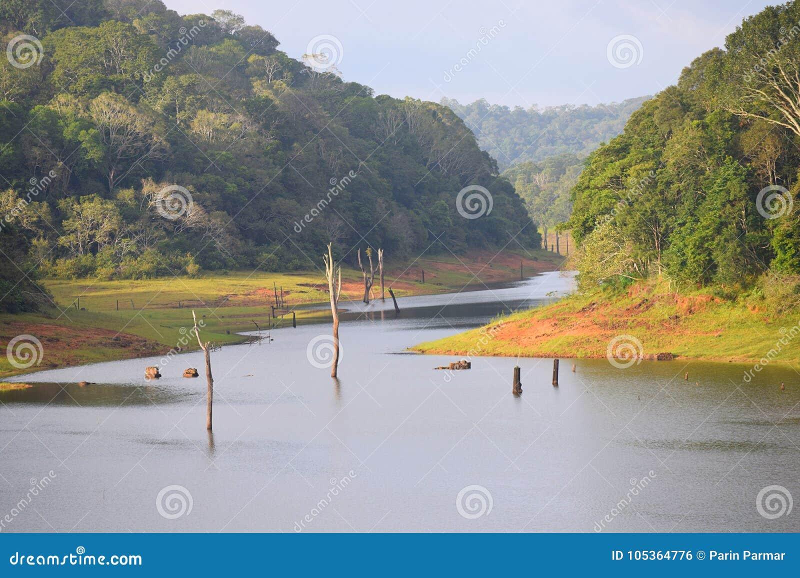 Periyar湖和国家公园, Thekkady,喀拉拉,印度