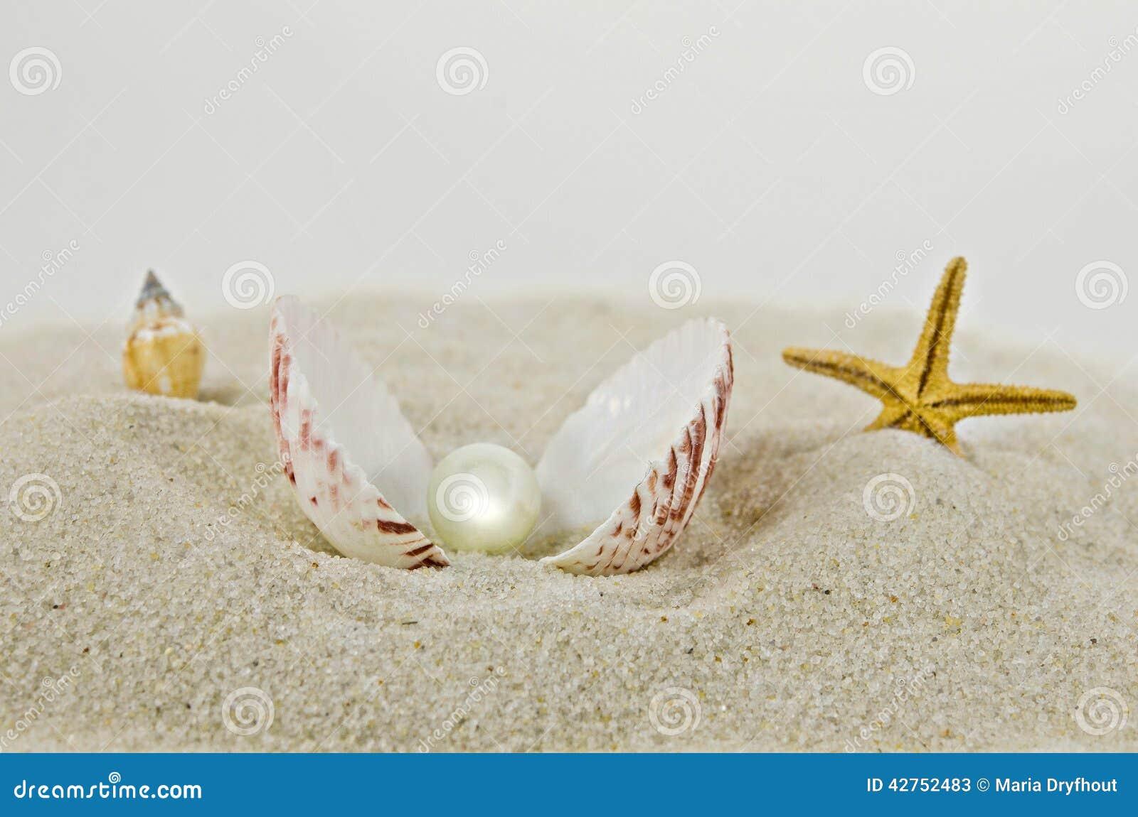 perle in einer muschel stockbild bild von juwel seashell