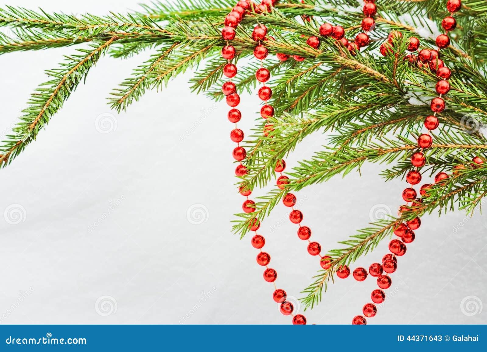 Perle rosse di Natale sulla fine verde del ramo dell abete su