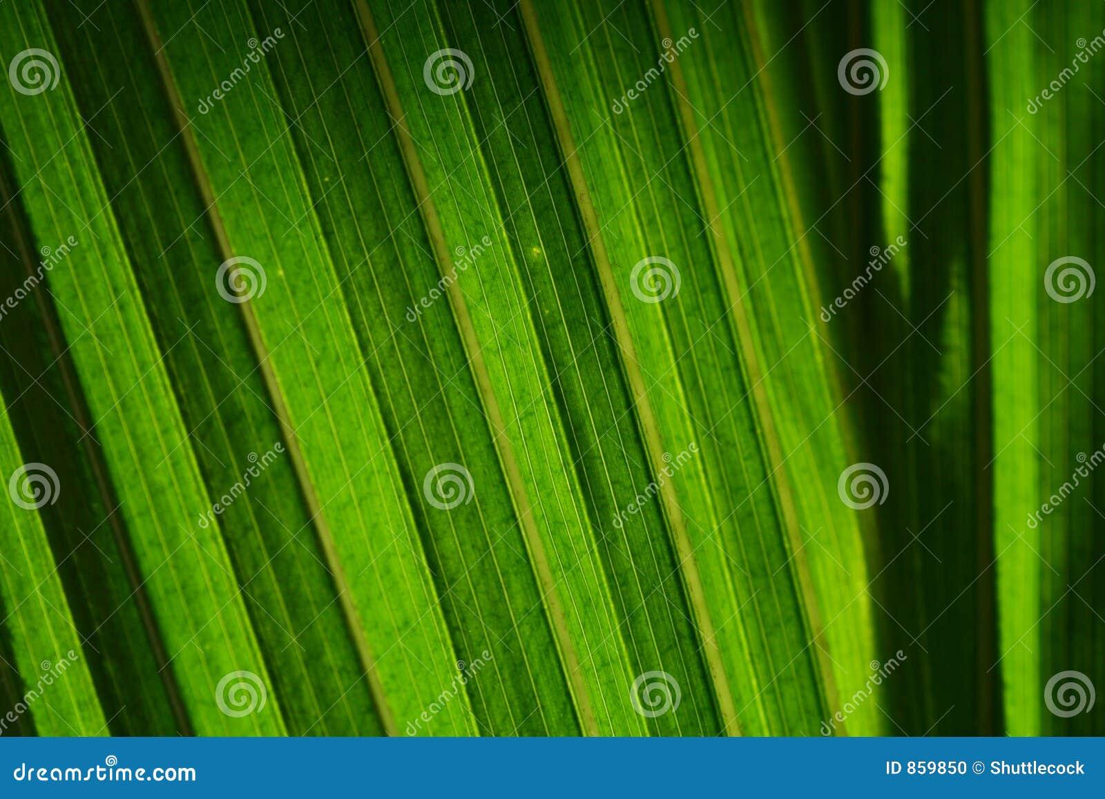 Permesso verde