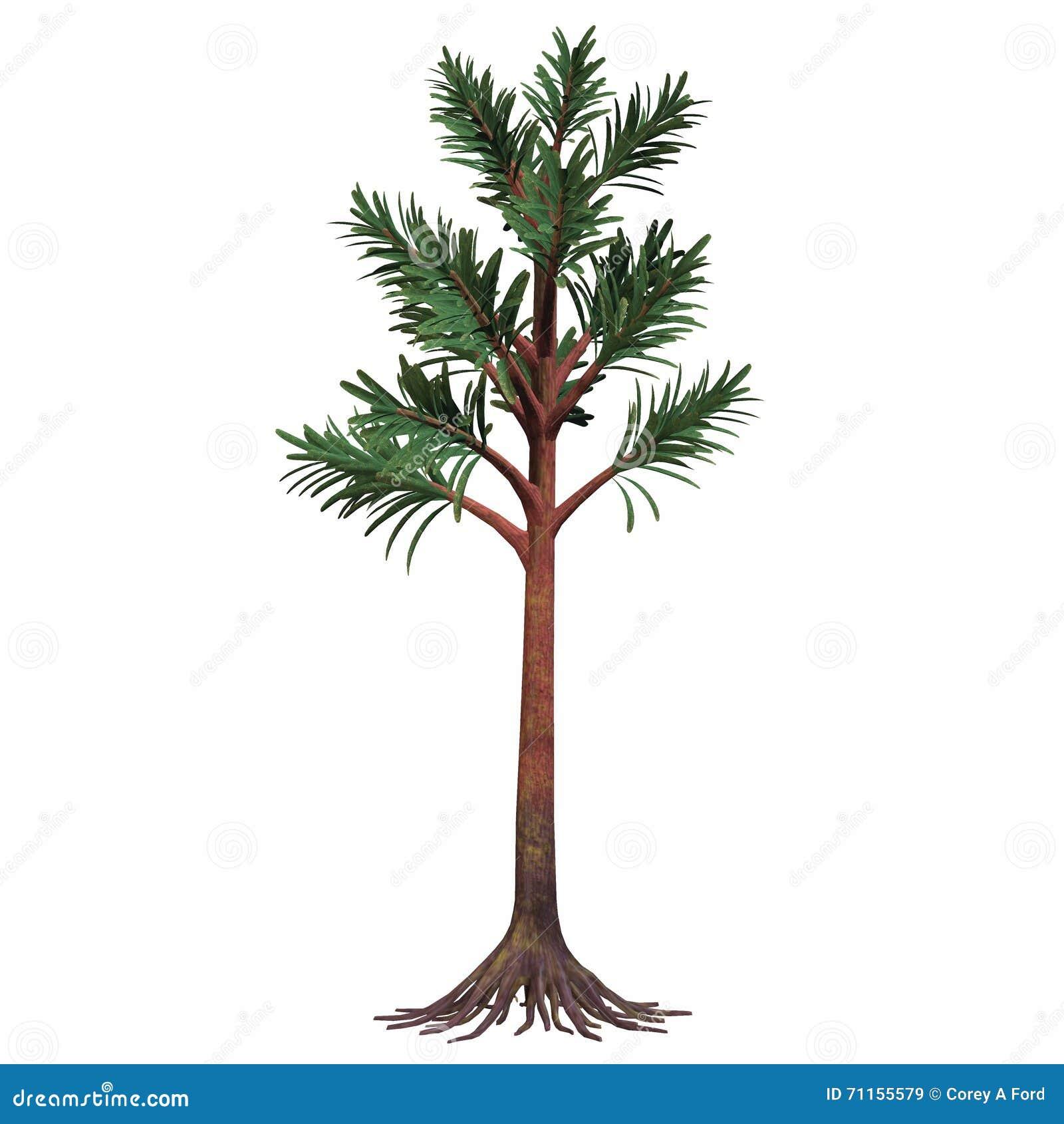 Permian Cordaites Tree Stock Illustration - Image: 71155579