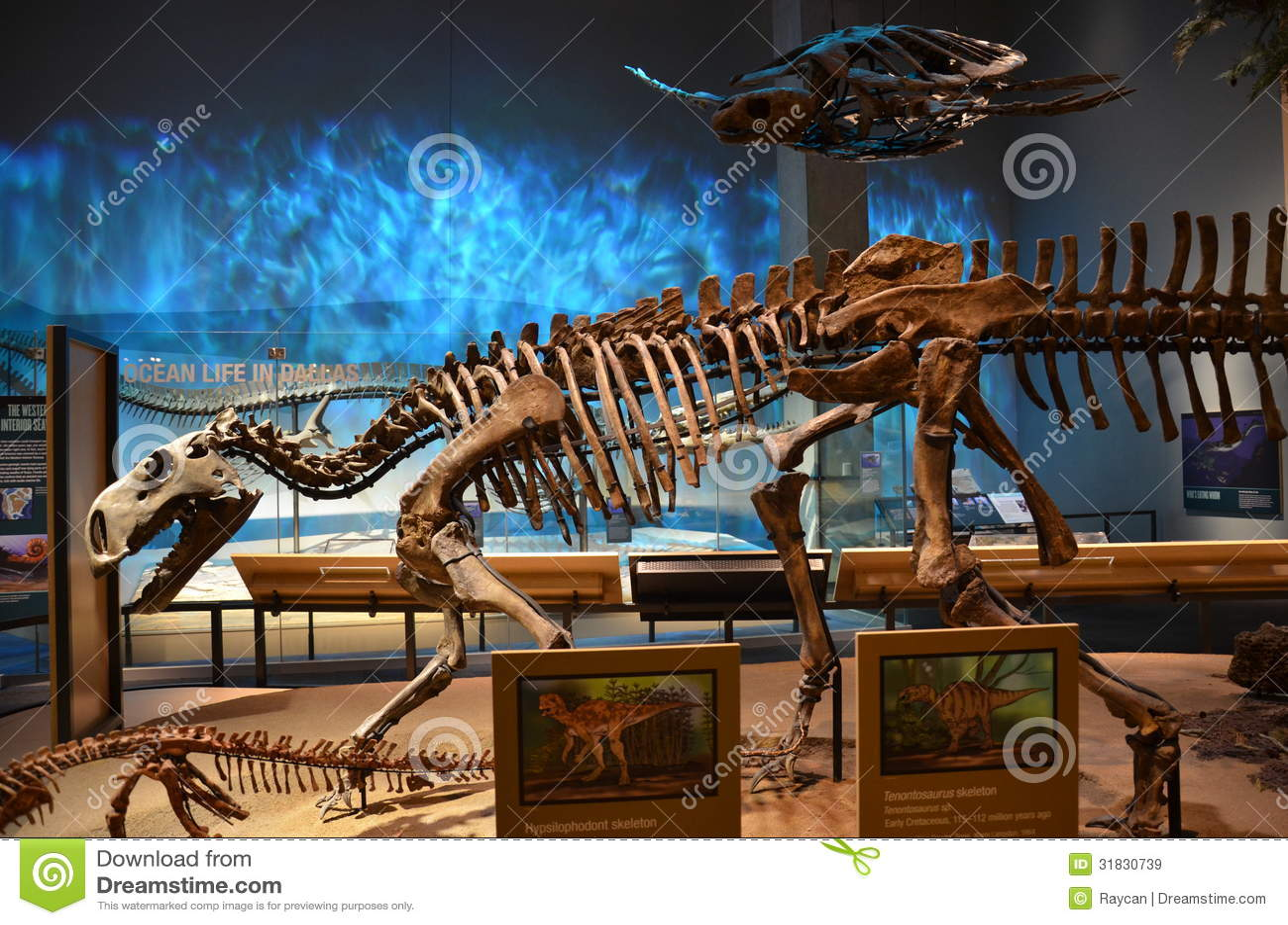 Perot Museum Fossils Perot Museum Fossils editorial