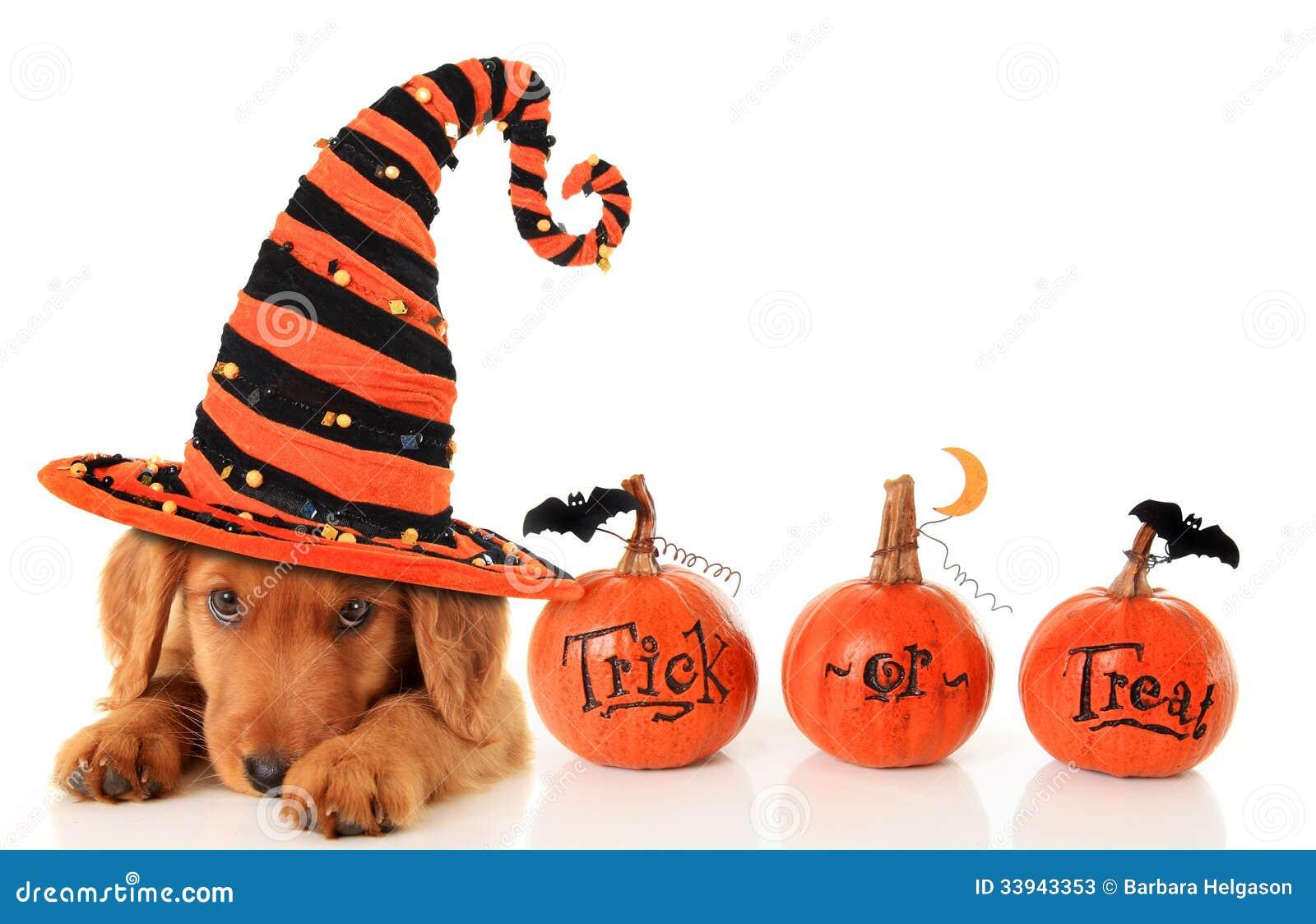Perrito de Halloween
