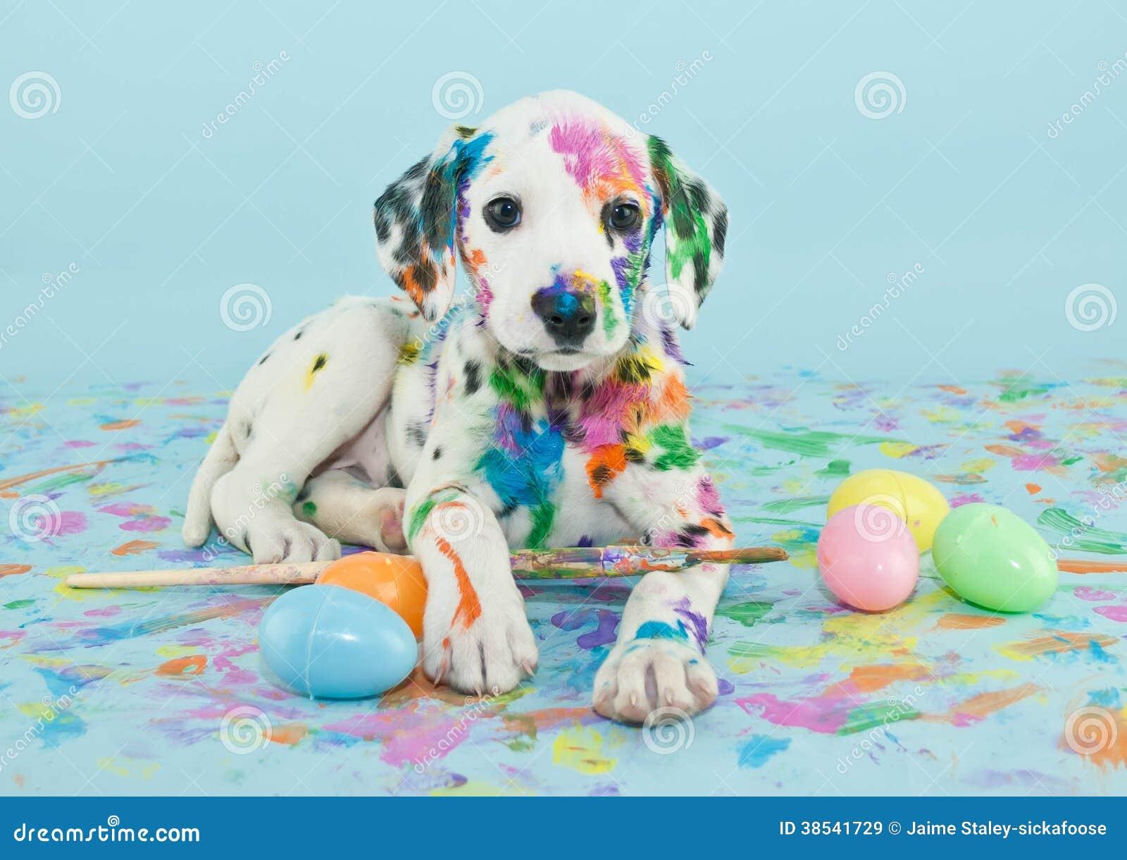 Perrito de Pascua Dalmatain