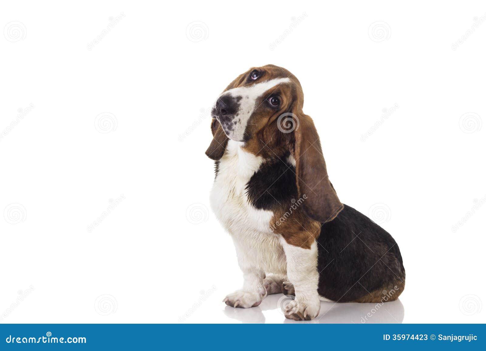 Perrito del perro de afloramiento