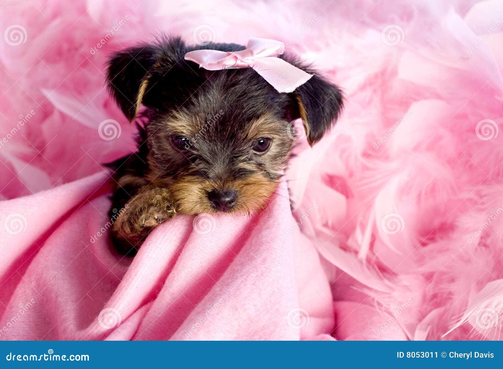 El perrito mastica la almohadilla