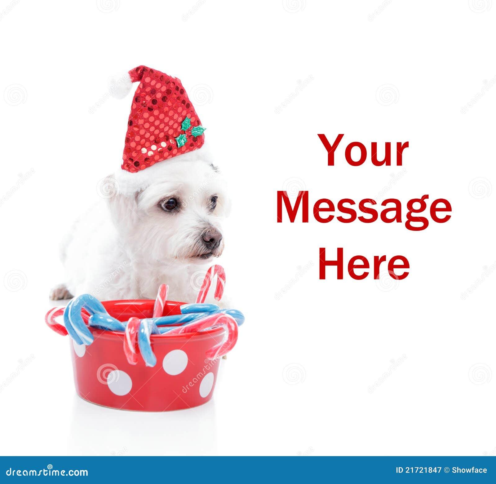 Perrito dulce de la Navidad