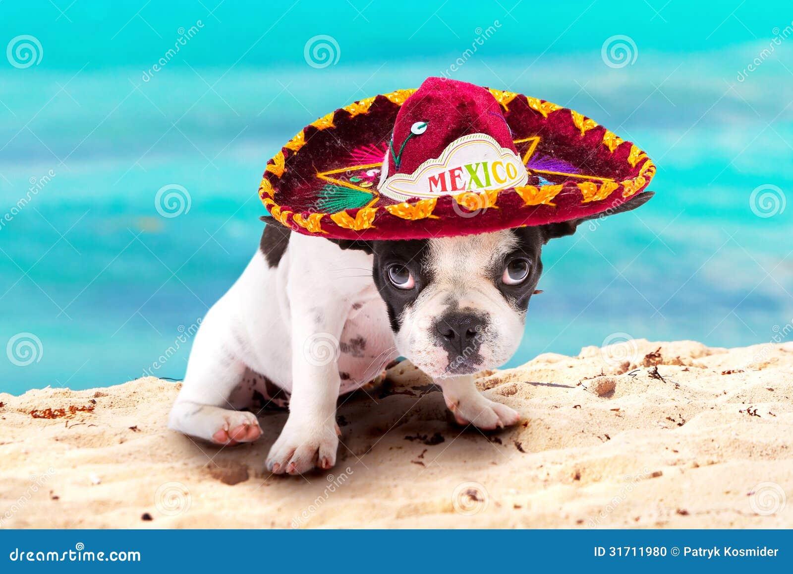 Perrito En Sombrero Mexicano En La Playa Foto de archivo ...