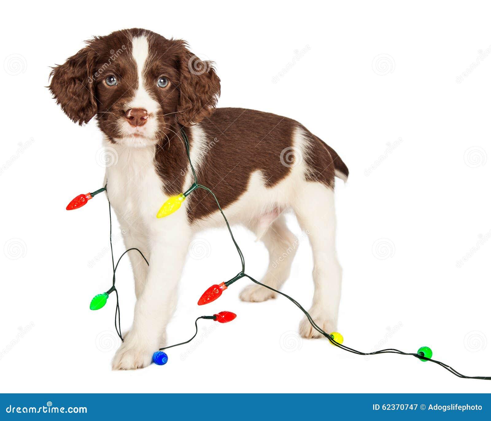 Perrito envuelto en luces de la Navidad