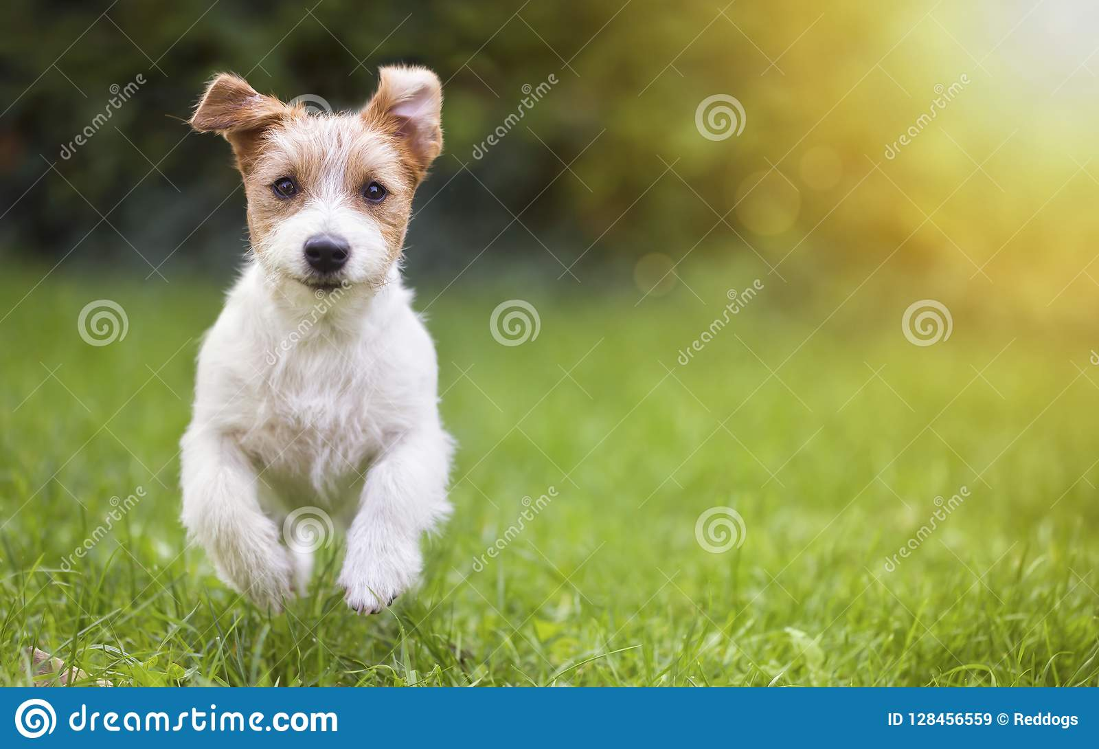Perrito feliz del perro casero que corre en la hierba