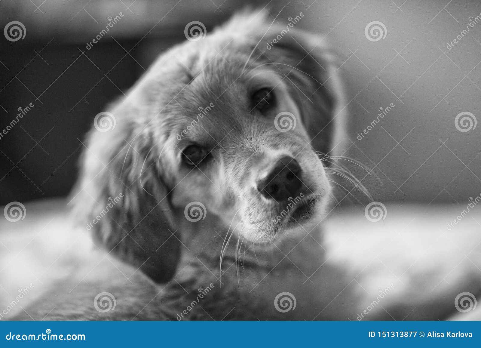 Perrito juguet?n El perrito elegante se está preparando para sentir bien a una guía para la gente ciega