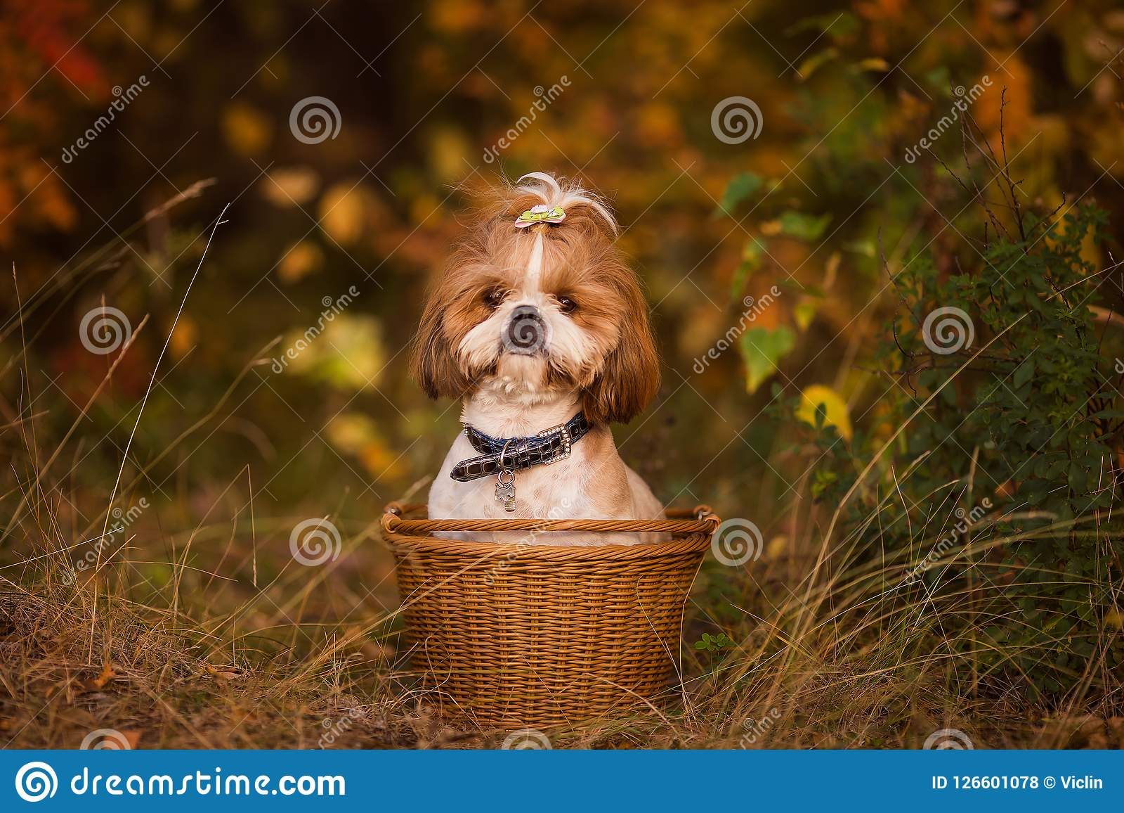 Perrito lindo en una cesta en el bosque del otoño