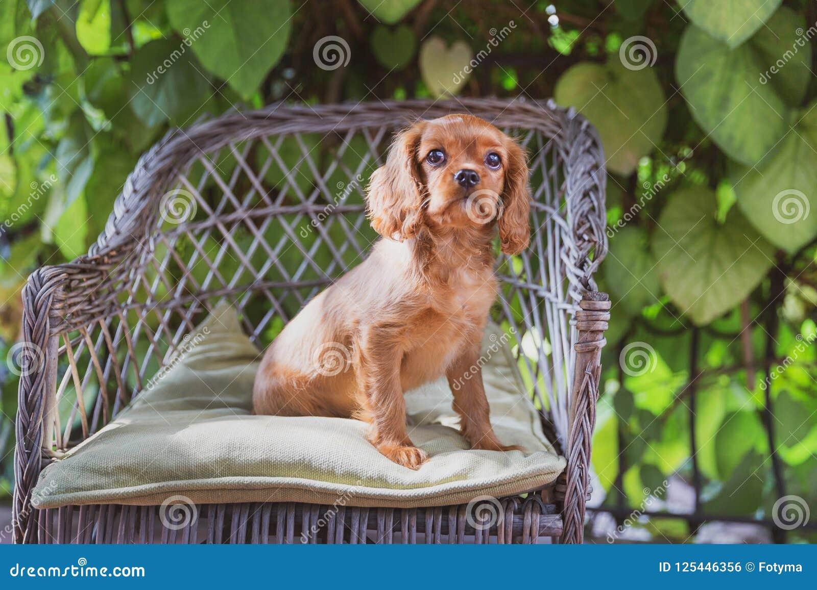 Perrito lindo que se sienta en la silla