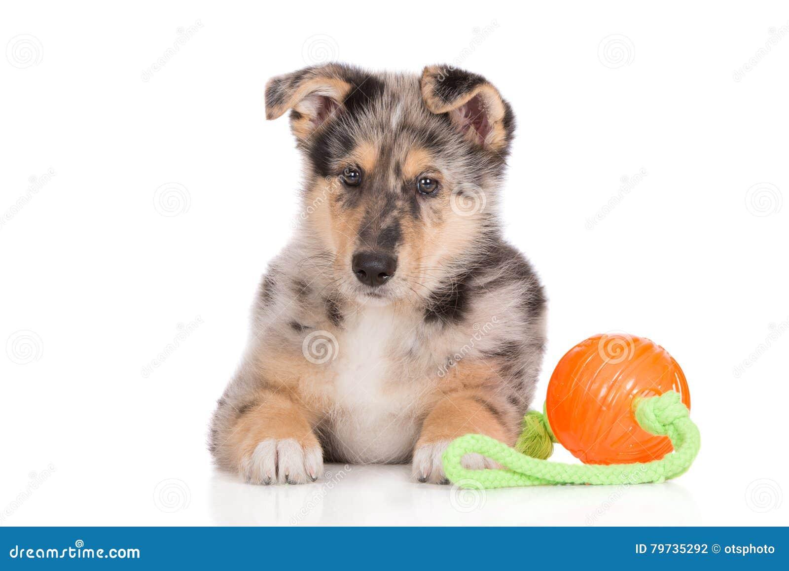 Perrito mezclado adorable de la raza que presenta en blanco
