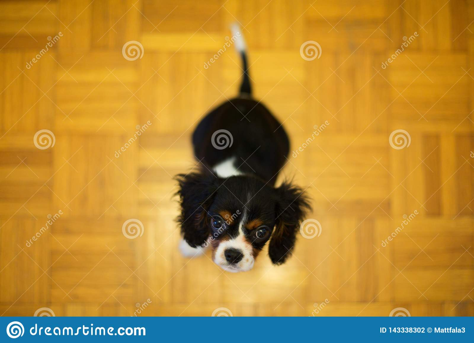Perrito que se sienta en el piso
