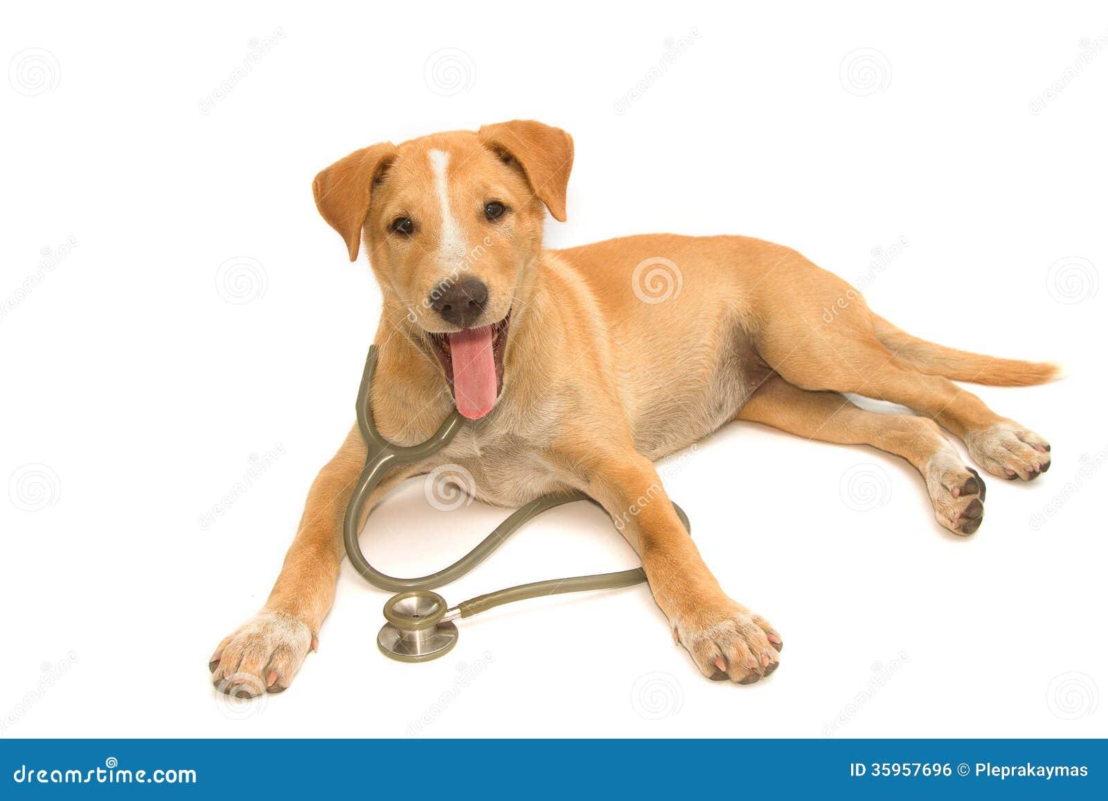 Perrito sano lindo con un estetoscopio