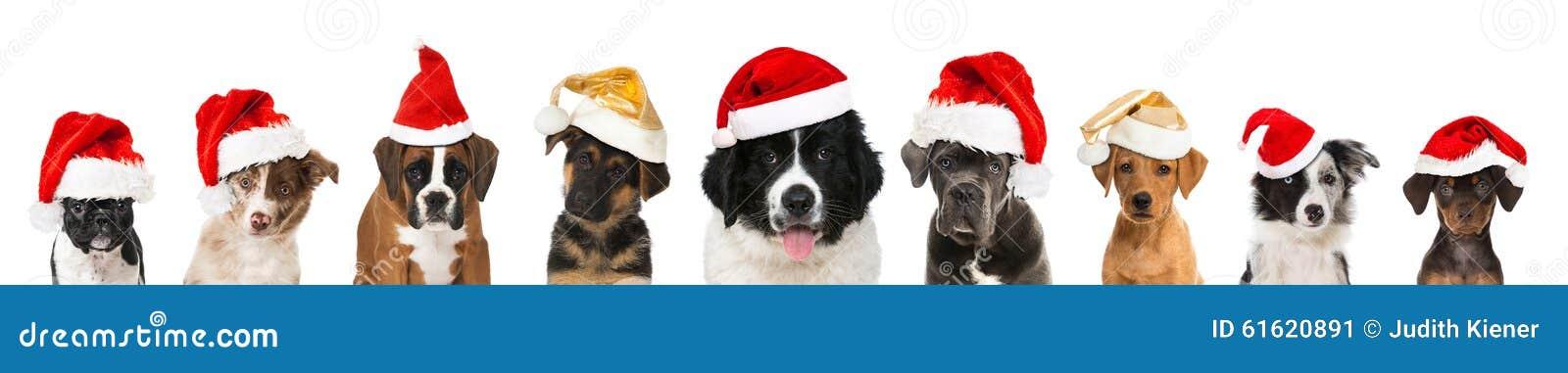 Perritos de la Navidad