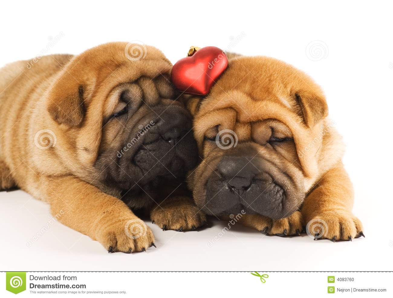 Perritos en amor