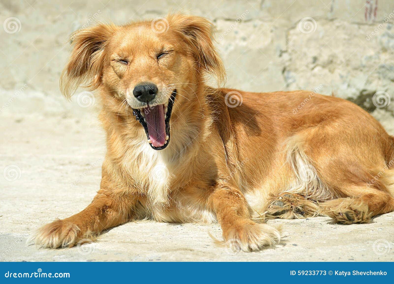 Download Perro imagen de archivo. Imagen de sentada, abajo, lindo - 59233773