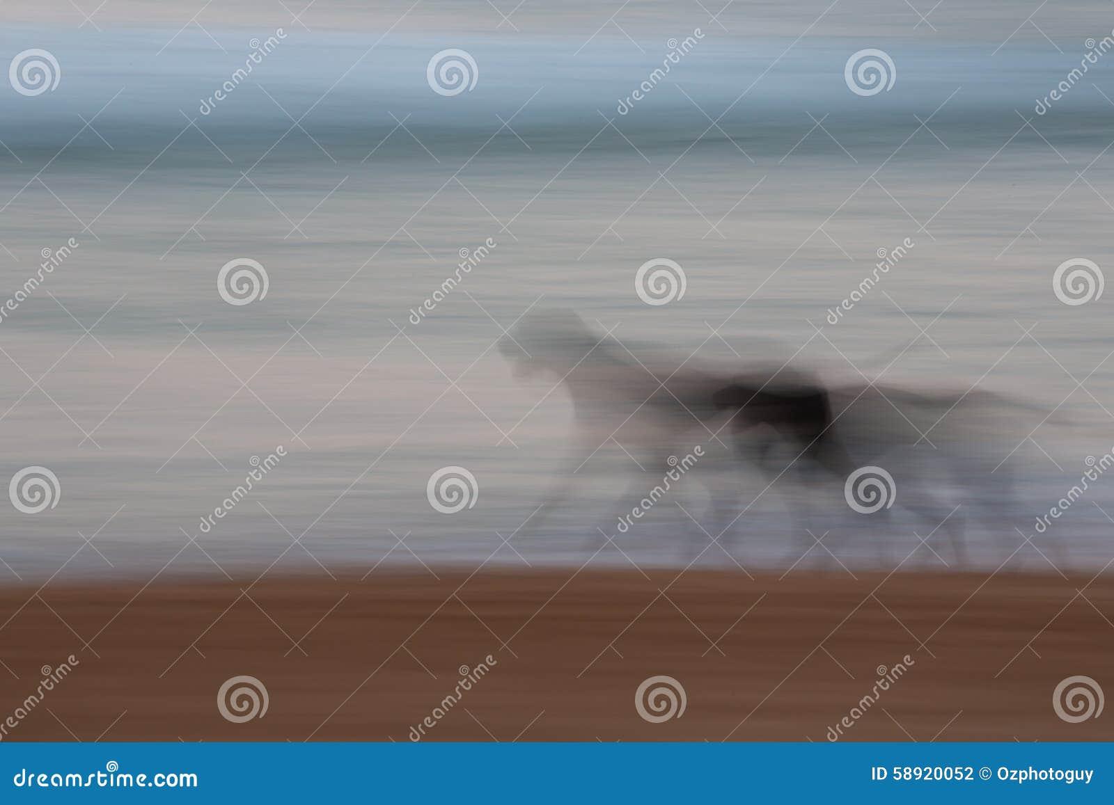 Perro abstracto que corre con el movimiento de filtrado borroso