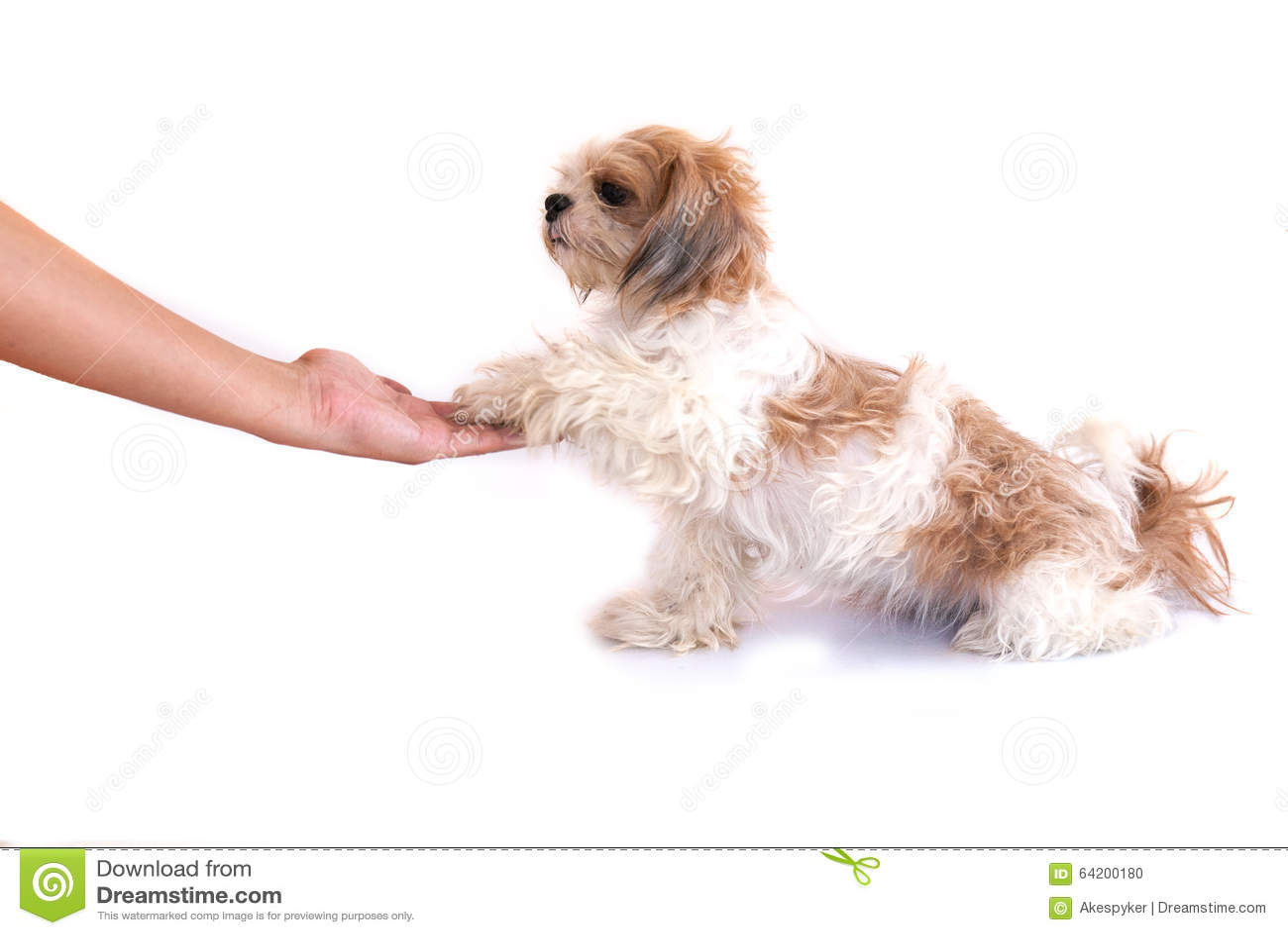 Perro aislado en blanco