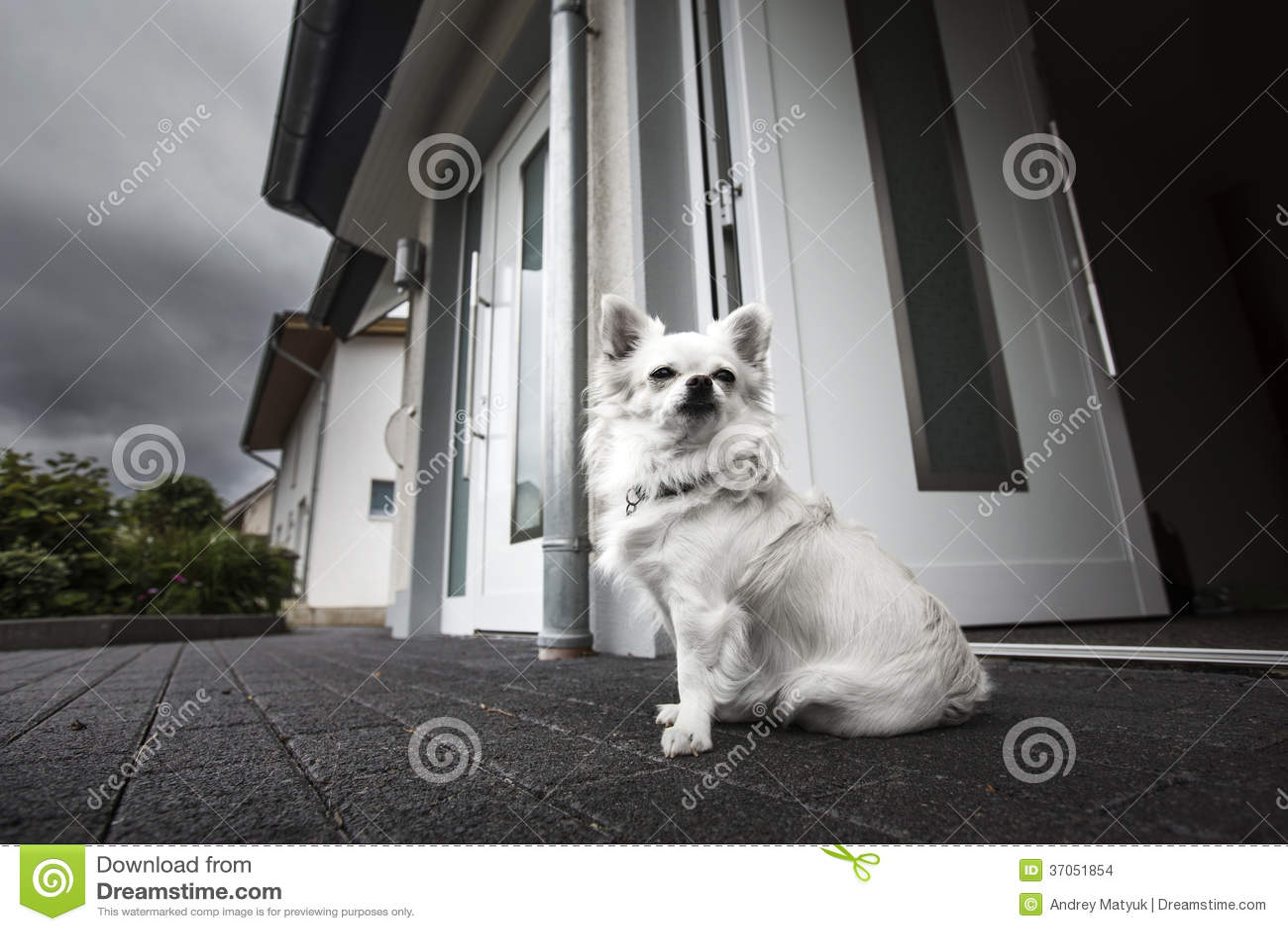 Perro blanco lindo