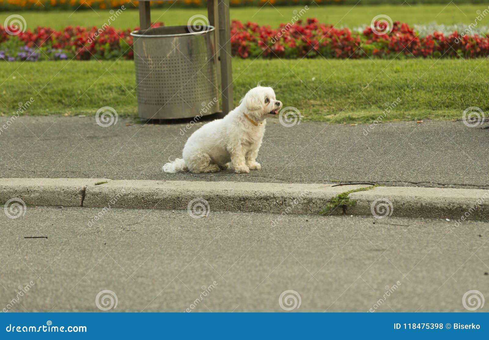 Perro blanco solitario en la calle