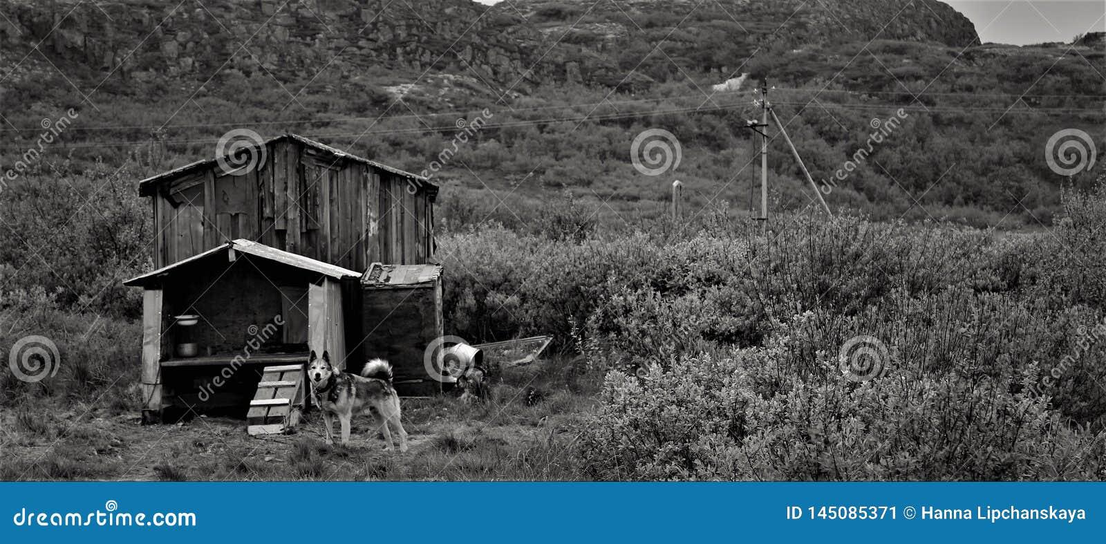 Perro blanco y negro y su casa de madera