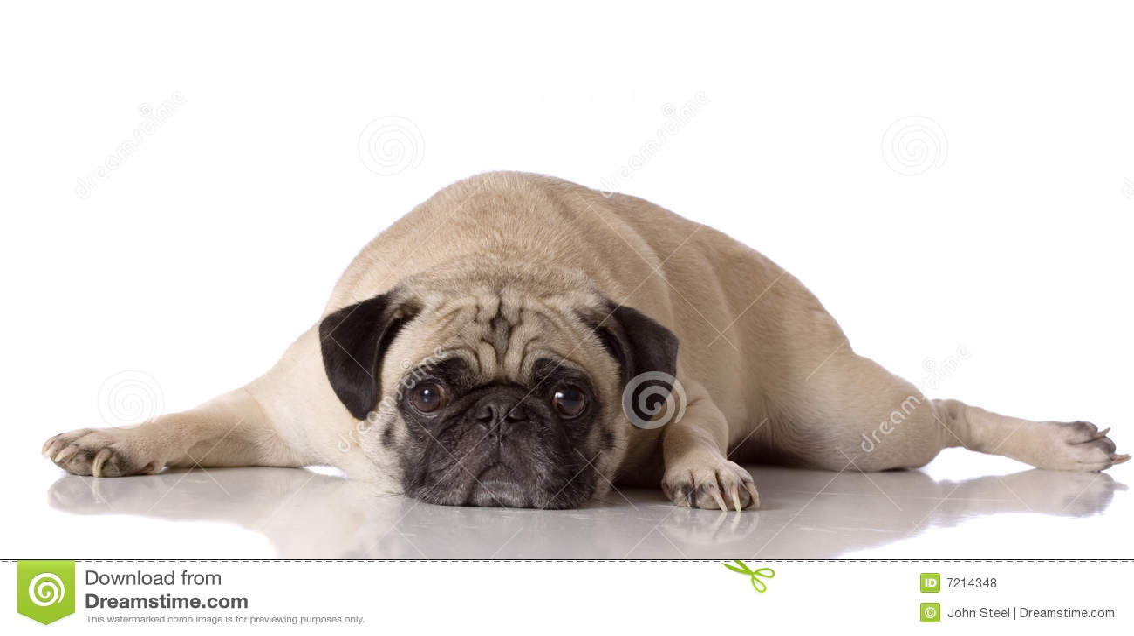 Perro cansado del barro amasado