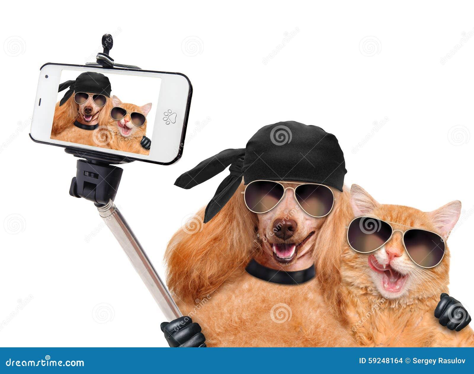 Perro con el gato que toma un selfie así como un smartphone