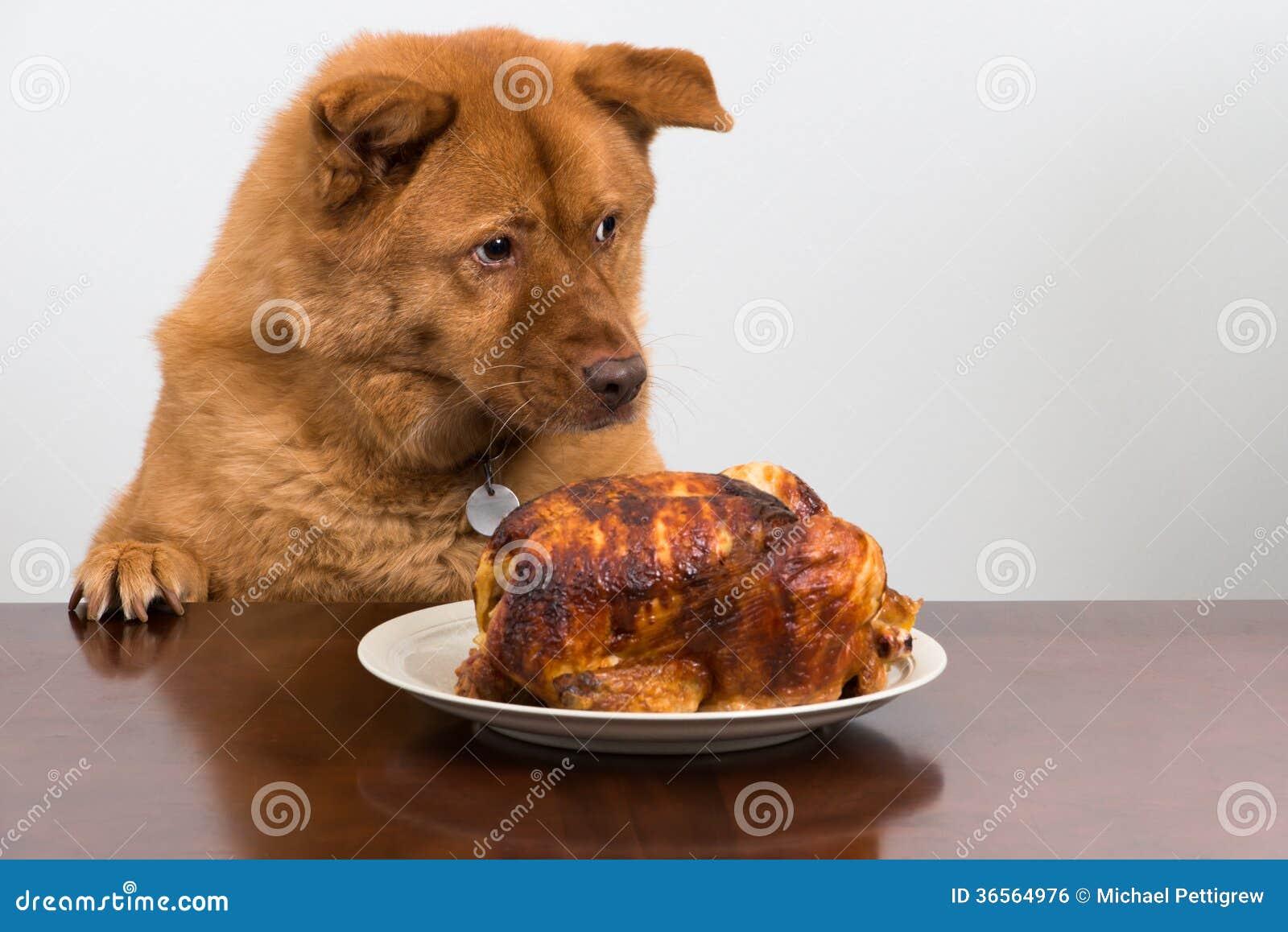 Perro con el rotisserie del pollo