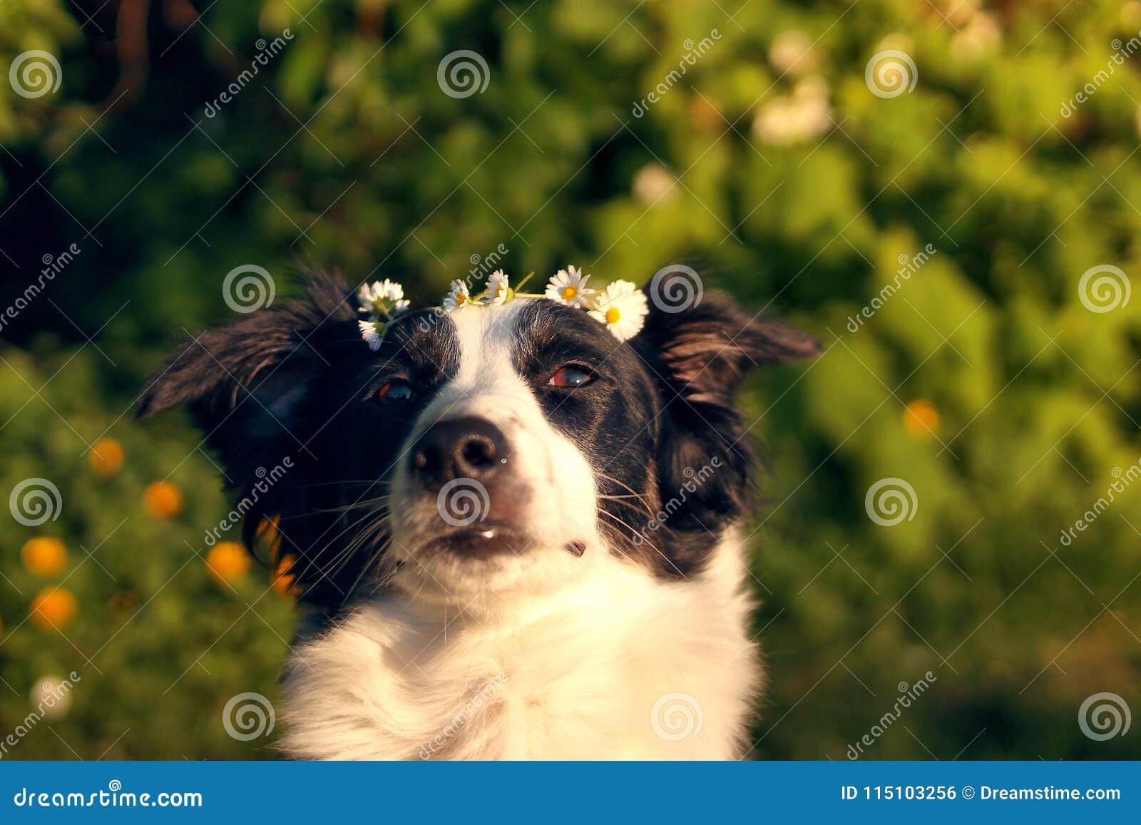 Perro con la corona de la flor