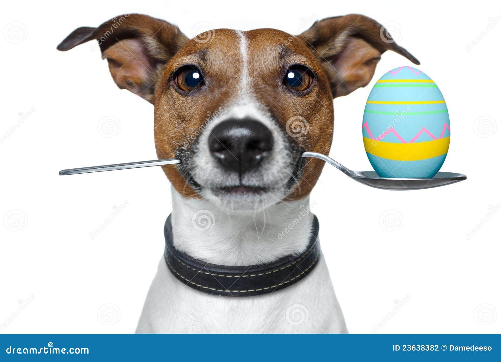 Perro con la cuchara y el huevo de Pascua