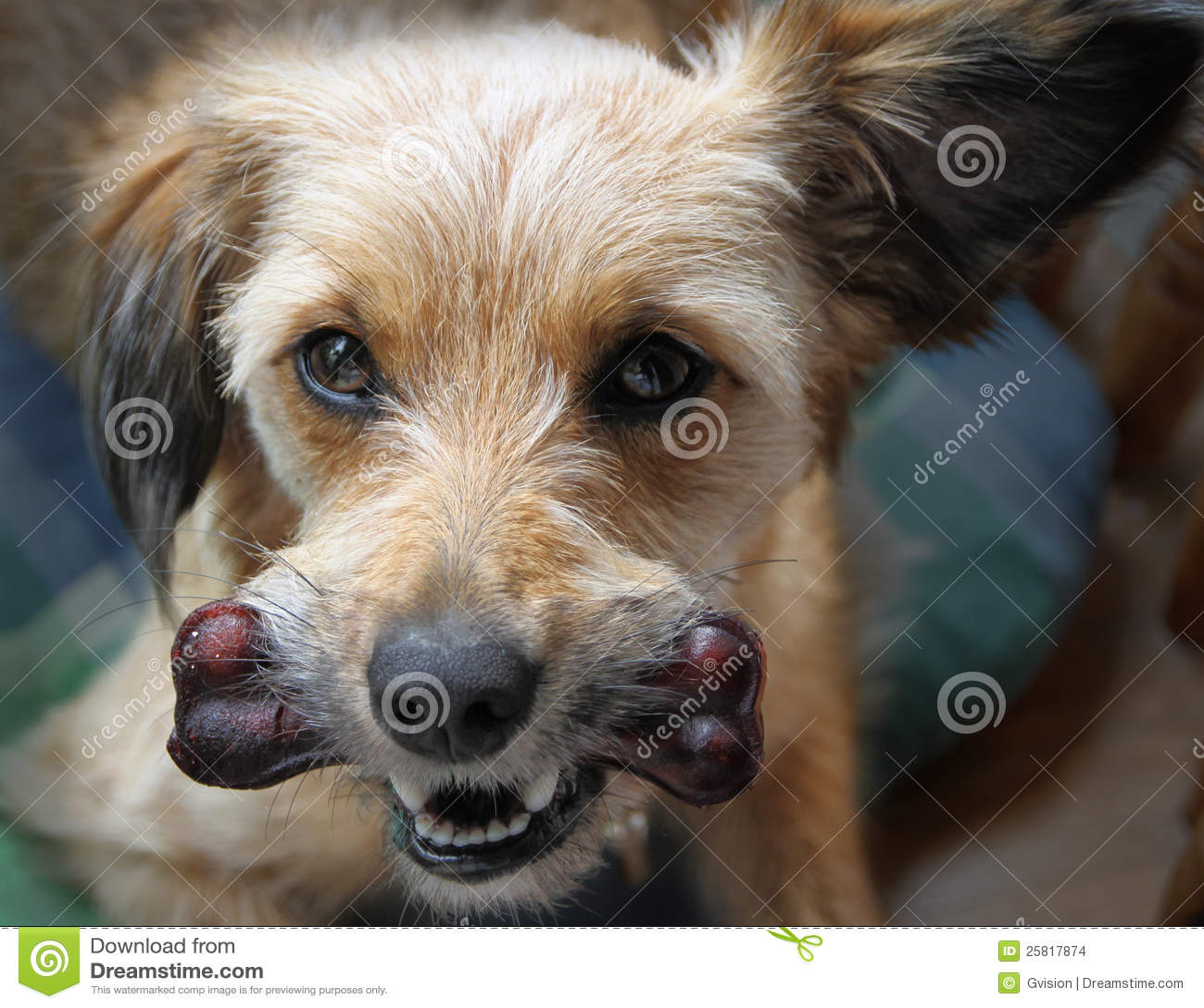 Perro con un hueso