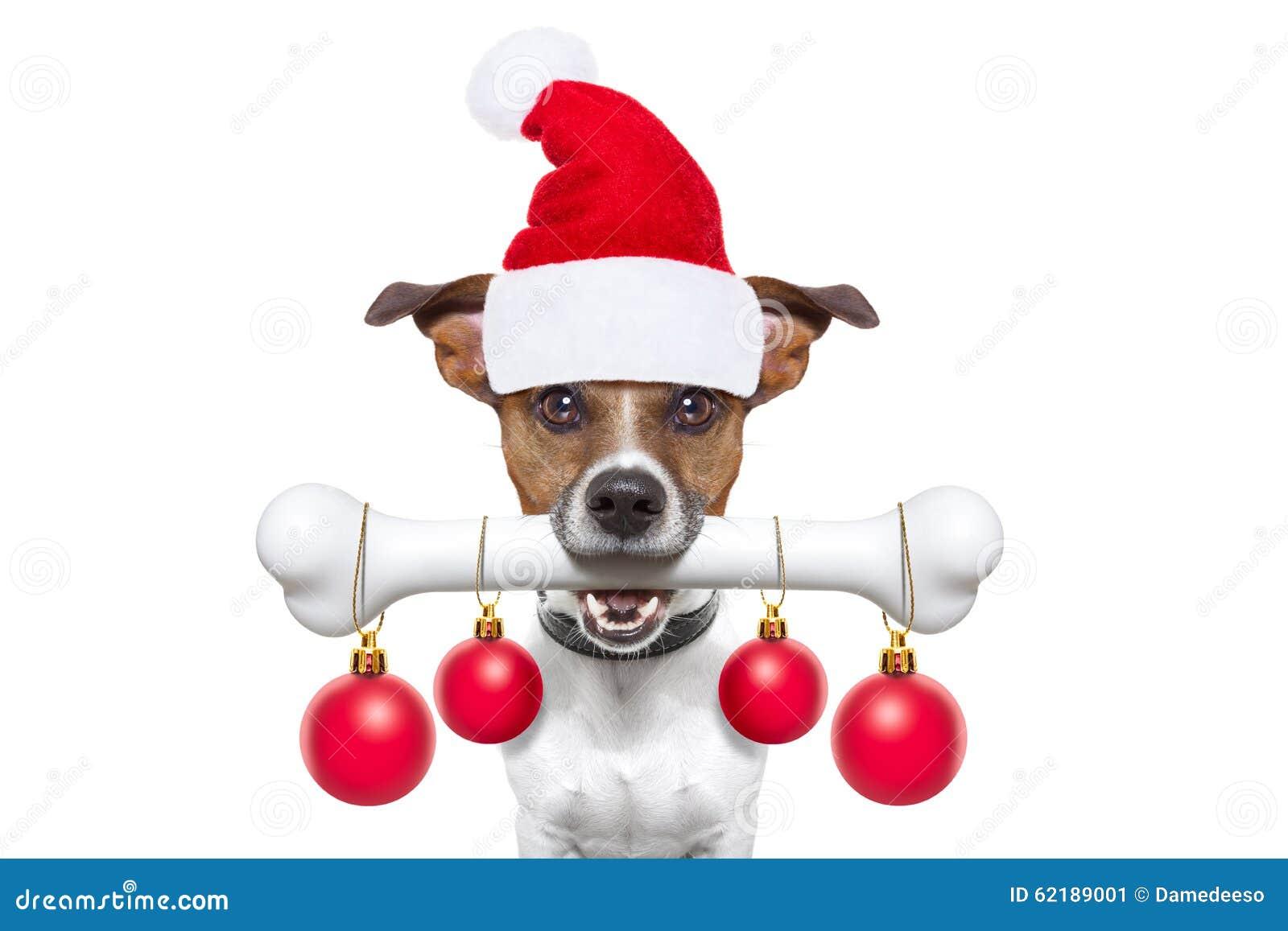 Perro con un hueso para la Navidad