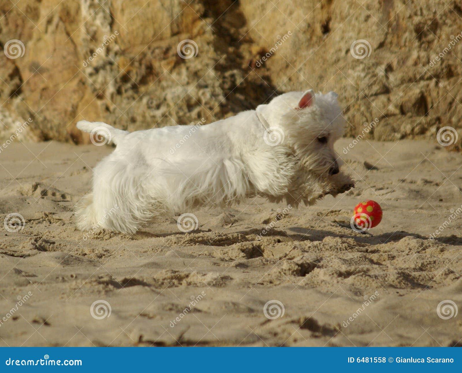 Perro corriente divertido en la playa