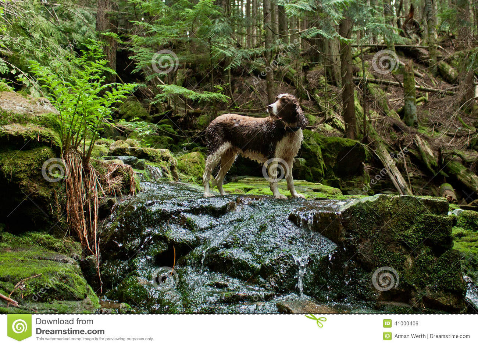 Perro de aguas de saltador
