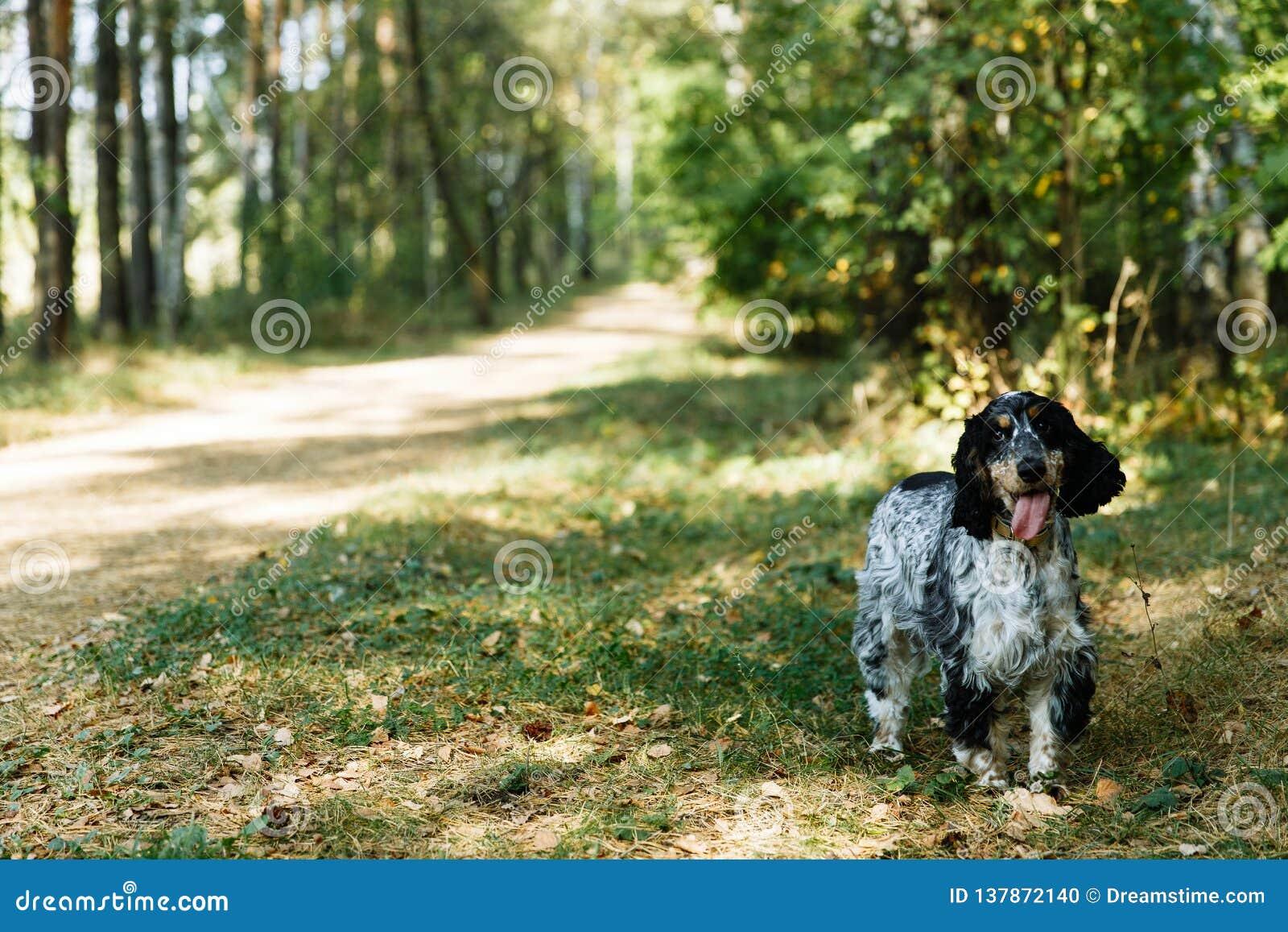 Perro de aguas en fondo verde
