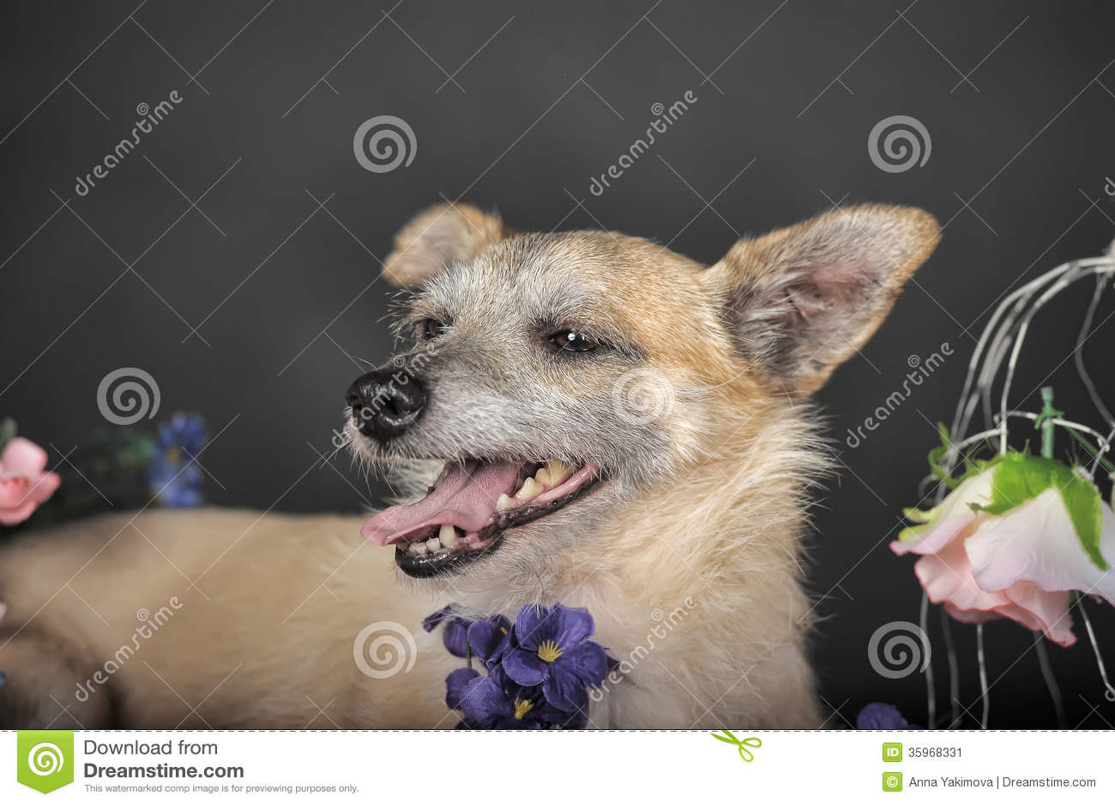 Perro de Brown