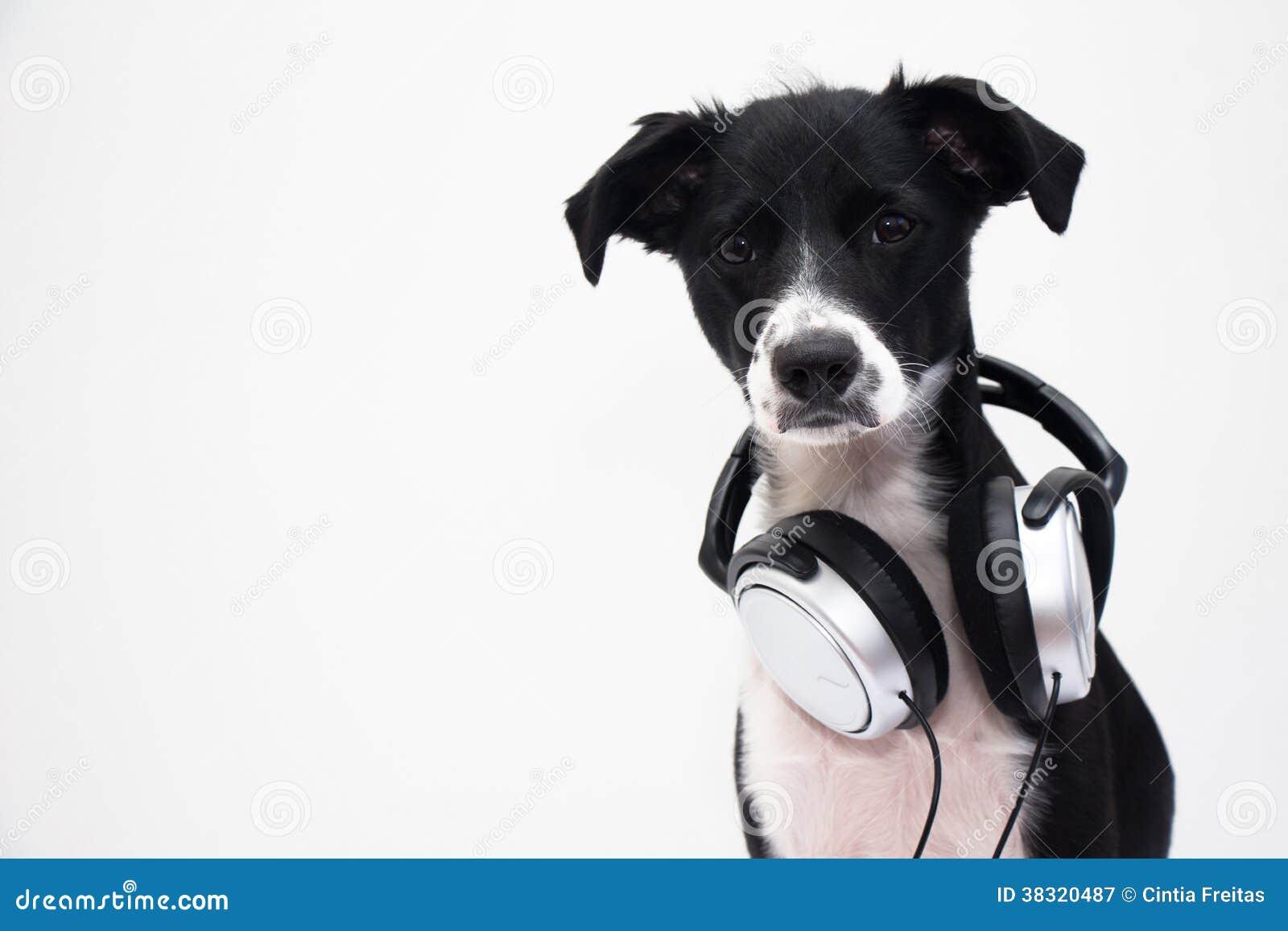Perro de DJ