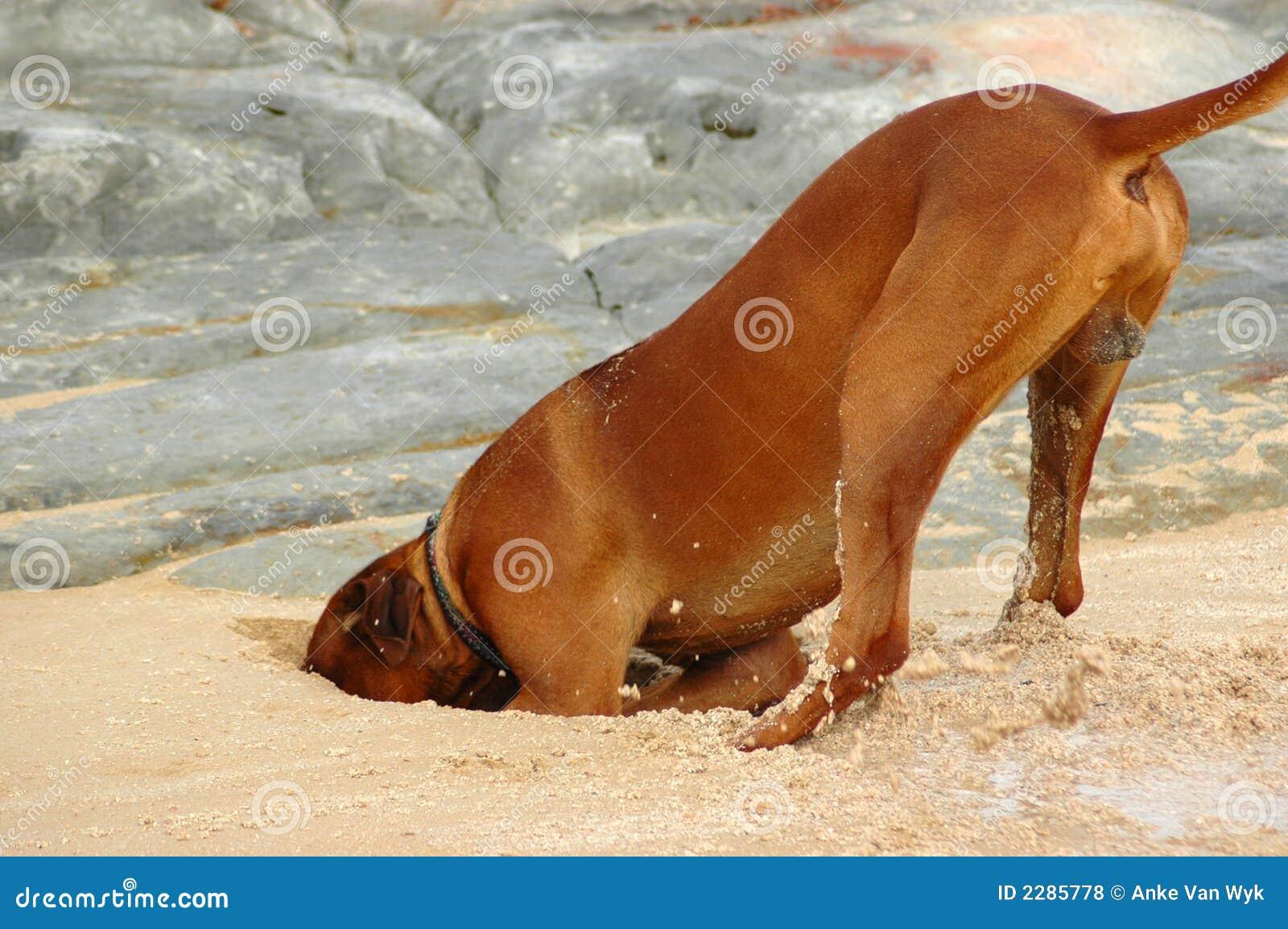 Perro de excavación