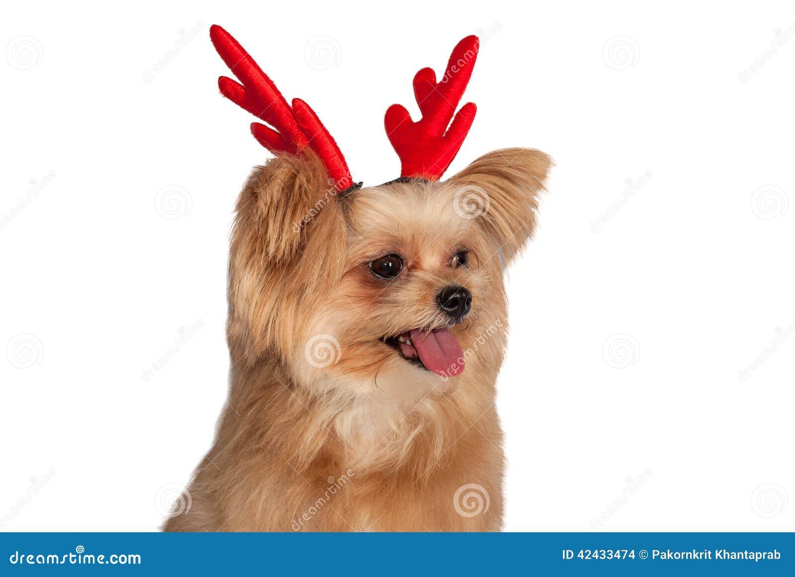 Perro de la asta de la Navidad
