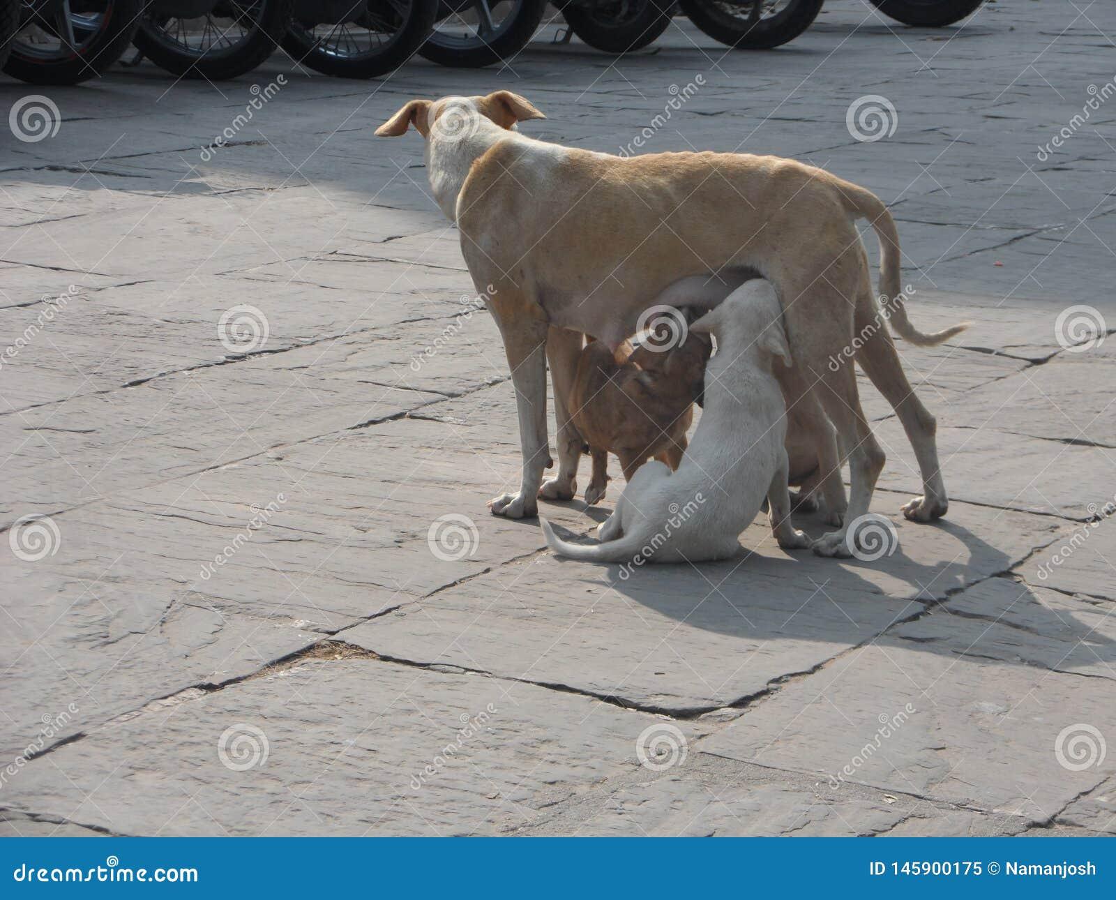 Perro de la madre que alimenta sus perritos
