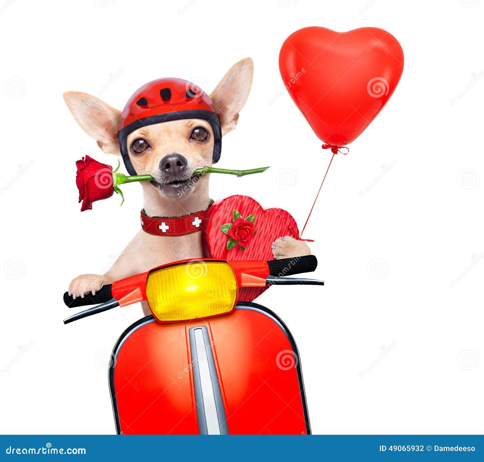 Perro de las tarjetas del día de San Valentín