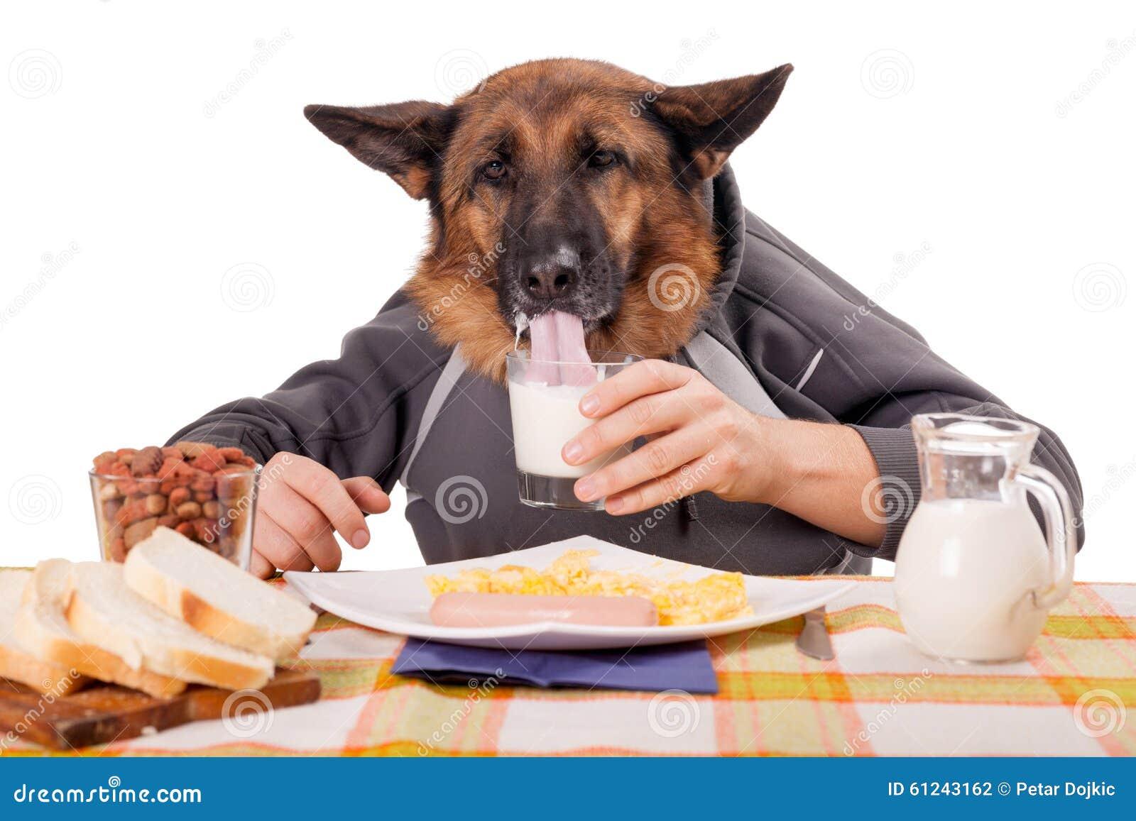 Perro de pastor alemán divertido con los brazos y las manos humanos, MI de consumición