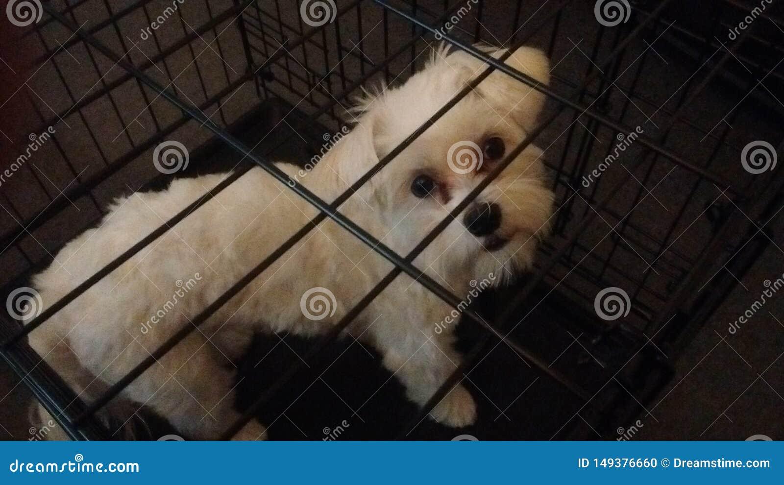 Perro de perrito blanco